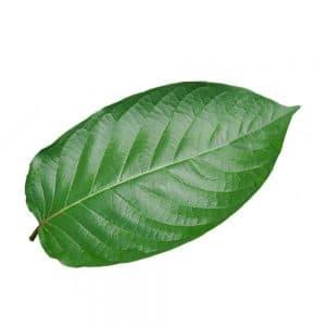 Kratom Leaf Green Vein Kratom