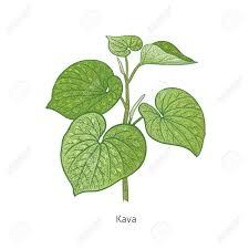 kratom and kava plant