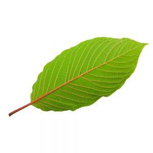 what is bali strain of kratom