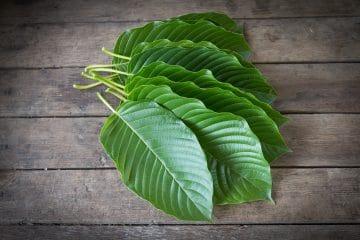 order kratom leaves for sale