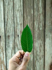 order remarkable herbs kratom